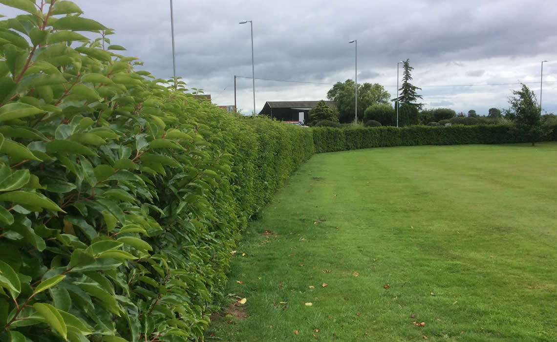 Benefits of Instant Hedges