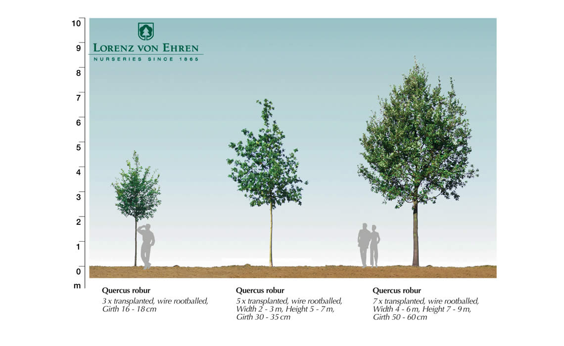 Tree Size Guide