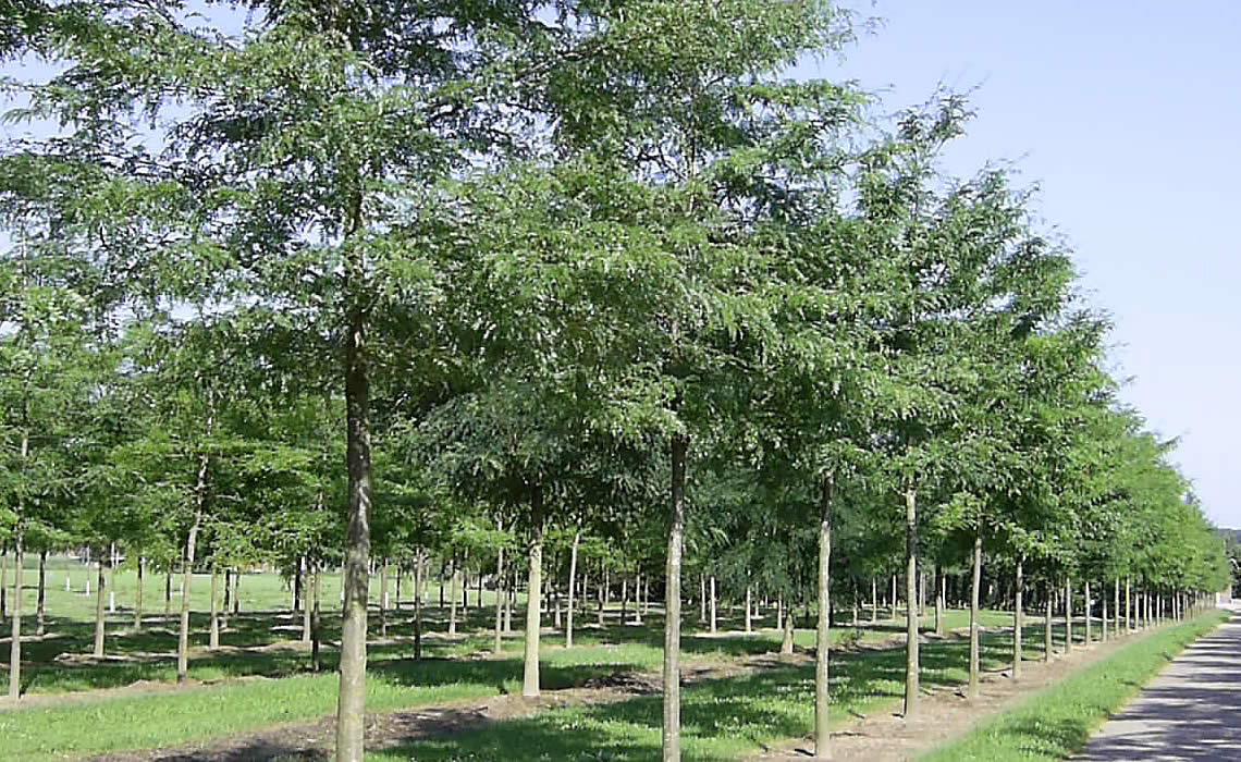 Trees for Wet Ground